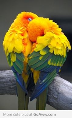 Parrots with beautiful coloring