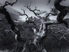 A Patagonia Scenic of the Andes Mountains, Weathered Dead Tree Branches, and Dramatic Clouds by Robin Moore Metal Prints Metal Print - 41 x 30 cm Andes Mountains, Cheap Wall Decor, Flower Wall Decor, Tree Branches, Dark Art, Patagonia, Find Art, Framed Artwork, Clouds