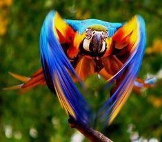 Su fauna nos inspira por la belleza de sus colores y formas. #modaBrasil #Brasilnosinspira