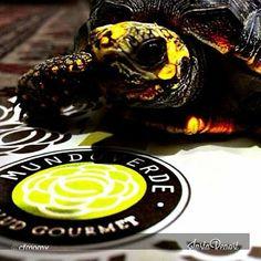 Con esta hermosa foto de una tortuga que vive enamorada de la lechuga, les contamos que las votaciones se cerraron el 28 de febrero y mañana 4 de marzo daremos a conocer a los ganadores!!!