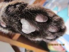 My paw