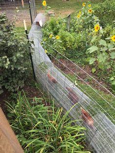 Chicken Tunnels -predator proofing - All For Garden Backyard Chicken Coop Plans, Chicken Coop Run, Chicken Cages, Chicken Coup, Chicken Garden, Building A Chicken Coop, Chickens Backyard, Chicken Runs, Chicken Tunnels