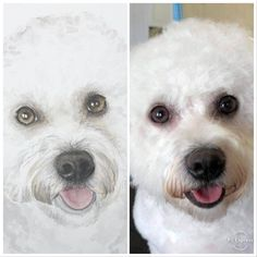 Bailey - Original art by Jill Aspin Oil Painting On Canvas, Watercolor Paintings, Baileys Original, Original Art, Original Paintings, Ballet Art, Love Your Pet, Dog Portraits, Fine Art Prints