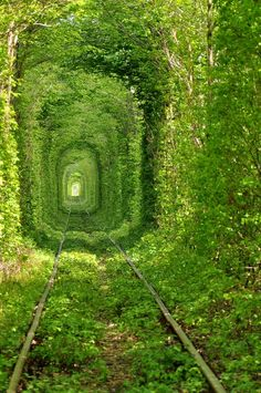 Ukraines Stunning Green Mile Tunnel enchanting-places