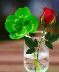 Napkin Rose, Italian Greetings, Italian Memes, Love Moon, Good Morning Coffee, Coffee Time, Happy Birthday Messages, Learning Italian, Morning Messages