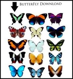 Butterfly Trend printables