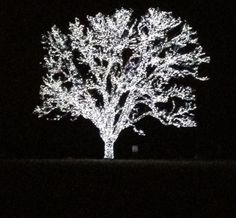 I need to touch this tree.   Flower Mound, Texas
