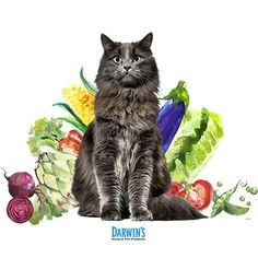 Does My Cat Need Vegetables?
