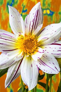It looks like paint was just flicked onto that flower.