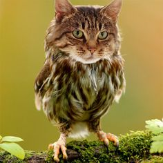 What do you get when you cross a cat with an owl? A meowl!