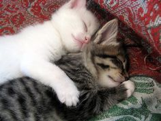 kitty cuddle :)