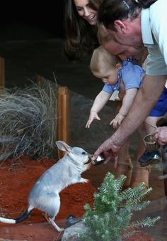 As Bilby George got a drink, Prince George reached out to touch him. | Prince George Met George The Bilby And It Was Love At First Sight
