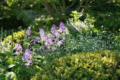 The Morgan Stanley Garden RHS Chelsea Flower Show 2016