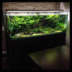 """422 Likes, 10 Comments - Luca Galarraga (@luca_galarraga) on Instagram: """"180 x 60 x 60, cliente Aquabase de manutenção. #manutençãoaquabase #aquapaisagismo #aquario…"""""""