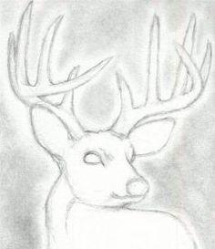 how to draw a deer head, buck, dear head step 4
