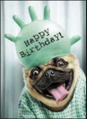 Happy Birthday Dog Meme, Happy Birthday Animals, Happy Birthday For Him, Birthday Wishes Funny, Happy Birthday Messages, Happy Birthday Images, Happy Birthday Greetings, Animal Birthday, Birthday Memes