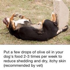 For dog owners who's pet need to stop shedding and have itchy dry skin.