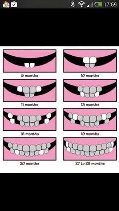 Finally nd easy to read tooth chart. - Unquie Baby Names - Ideas of Unquie Baby Names - Finally nd easy to read tooth chart. Baby Kind, My Baby Girl, Our Baby, Tooth Chart, Baby Health, Everything Baby, Baby Milestones, Baby Hacks, Baby Care