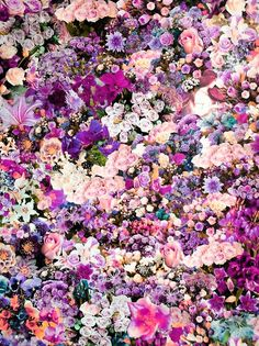 Flowers-as-confetti. --Pia (It's a floral orgasm! What a beautiful floral arrangement. My Flower, Beautiful Flowers, Flower Wall, Flower Bomb, Flower Patch, Beautiful Mess, Wall Of Flowers, Flower Mural, Flowers Nature