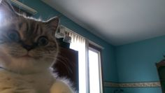 Resultado de imagen para scuba the cat
