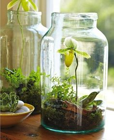 Mason jar terrarium - this is really pretty BUT you have to water ONLY with distilled or R/O water, and these guys actually grow pretty fast, so you'd have to repot it every year.