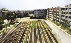 Bohn Viljoen Architects, Cuba 2002 Lab for urban agriculture Urban Agriculture, Urban Farming, Urban Landscape, Landscape Design, Urban Design Concept, Barcelona, Agricultural Land, Sustainable City, Green Architecture