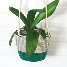 Add some greenery to your home with these unique hanging planters! Our hanging planters are available in three different sizes. To adjust the heights, just tie as many knots as needed.  Mia Mélange planters are made from 100% cotton rope which we carefully sew together in a coiling technique. The cotton is grown locally in South Africa by farmers who are members of the Better Cotton Initiate (BCI). Cotton Rope, Hanging Planters, Potted Plants, Farmers, In The Heights, Greenery, South Africa, Knots, Sew