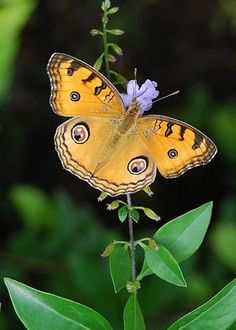 Butterfly by Ashish Hathi