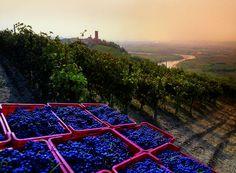 Paesaggi vitivinicoli del Piemonte: Langhe-Roero e Monferrato - dal 2014 Patrimonio dell'Umanità