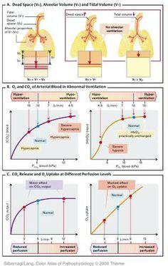 PATHOPHYSIOLOGY OF PULMONARY SYSTEM