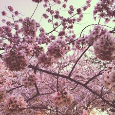 FotoDC National Cherry Blossom Photo Contest.