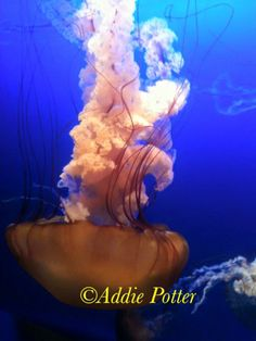 """This original photograph, """"Under the Sea"""", is now available for order and framing. DM me for details!"""