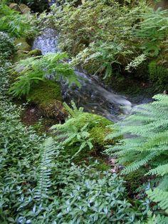 Babbling brook in Japanese Garden Sunken Garden, Italian Garden, 19th Century, Gardens, Japanese, Plants, Japanese Language, Outdoor Gardens, Plant
