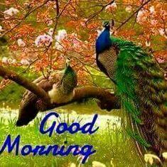Good Morning Photos, Good Morning Good Night, Good Morning Wishes, Morning Kisses, Morning Morning, Morning Greetings Quotes, Morning Quotes, Encouragement Quotes, New Day