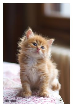 """This series reminds me of the epic """"soft kitty"""" song from Big Bang theory: """"Soft kitty, warm kitty little ball of fur. Happy kitty sleepy kitty purr, purr, purr"""" Infos Name: Keks Gender: Young boy ..."""