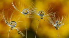 World in the droplets - Macro droplets and flowers