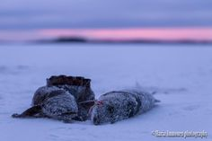 Fisherman's sunset. - Clickasnap