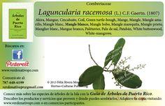 Redescubre el Mangle... con la Guía de Árboles de Puerto Rico www.verdenativopr.com