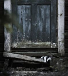 abandoned house in finland overtaken by animals kai fagerstrom Wild Creatures, Woodland Creatures, Cottage In The Woods, House In The Woods, Animal Photography, Amazing Photography, Kai, Perfect World, Animal House