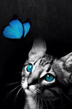 cat and a blue butterfly