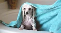 Sure, some breeds require more grooming than others, but there are a few dog grooming necessities that should be added to every pup's regular routine.