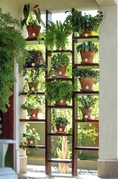 Once you've designed your garden, select the plants you want to grow during each season. There's no better solution in order to bring a vertical garden. While arranging a vertical garden, it's always…MoreMore  #GardeningIdeas
