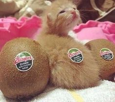 One Of These Kiwis Is Not Like The Others