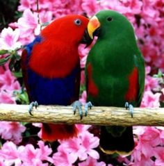 birds by Sherrylee