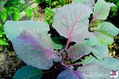 Roter Kohlrabi vom Blumenwichteln Gardening, Diy Blog, Plant Leaves, Plants, Flowers, Creative, Lawn And Garden, Plant, Planets
