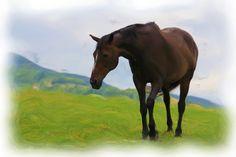 Art Reference, Horses, Animals, Animales, Animaux, Animal, Animais, Horse