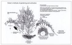 Permacultura y Autosuficiencia: Swales o Curvas de Retencion de Agua o Careos del Agua