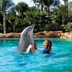 Discovery Cove, FL - my sister & I swam with the dolphins and sting rays - such beautiful creatures!