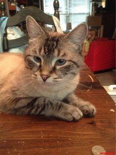 orion - http://cutecatshq.com/cats/orion/