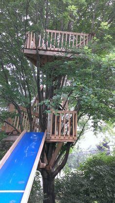The Olson tree house